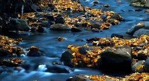 Água e folhas 3. Foto de Stock Royalty Free