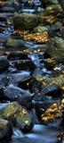 Água e folhas 5. Fotografia de Stock