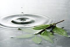 Água e folhas Foto de Stock