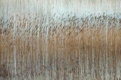 Água e juncos Imagem de Stock