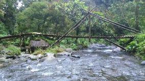 Água e natureza claras Fotografia de Stock Royalty Free