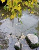 Água e pedras de Leafes foto de stock