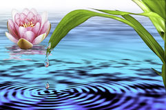 Água e vida Imagem de Stock