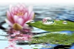 Água e vida Imagem de Stock Royalty Free