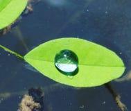 Água em uma folha Imagem de Stock