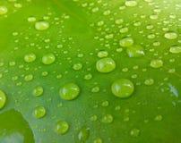Água em uma folha dos lótus Imagens de Stock