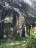 A água emite-se a luz através das palmeiras fotos de stock