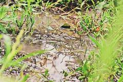 Água enlameada com algumas gramas e estação das chuvas Fotos de Stock