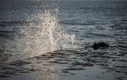 A água espirra Fotos de Stock Royalty Free