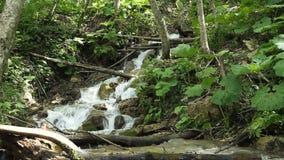 Água fresca de um córrego da floresta que corre sobre rochas vídeos de arquivo