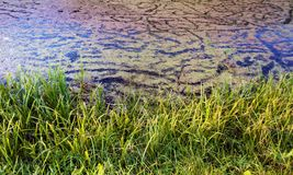 Água interessante do pântano da textura Foto de Stock Royalty Free