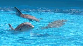 Água interna feliz de três golfinhos fotografia de stock