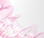 Água-lírio cor-de-rosa Ilustração Royalty Free