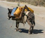 Água levando do asno em Etiópia rural fotografia de stock