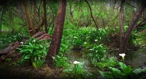 Água lilly durante o inverno do SA imagem de stock