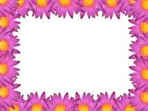Água Lily Frame imagens de stock royalty free