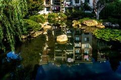 Água Lily Pond 6 de Wuhu Anhui China imagem de stock