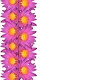 Água Lily Vertical Frame fotos de stock