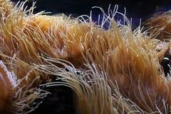 Água-mundo Coral Garden fotos de stock