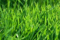 Água na grama verde Foto de Stock