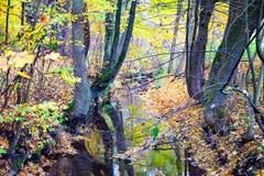 A água na madeira Foto de Stock