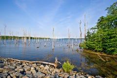 Água na região selvagem Imagens de Stock