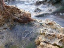 Água na rocha Imagem de Stock Royalty Free