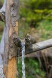 Água natural da bebida da fonte da floresta em montanhas de Carpathians Fotografia de Stock