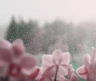 A água natural deixa cair no vidro de janela com fundo verde e com flor Fotos de Stock