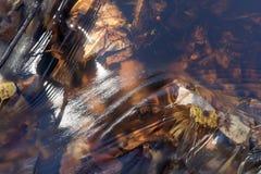 Água no movimento Foto de Stock