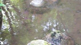 Água no rio e em rochas grandes vídeos de arquivo