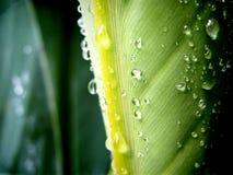 Água no verde Fotos de Stock