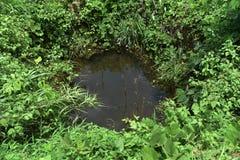 Água pequena da lagoa Foto de Stock