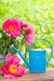 A água pode no jardim Foto de Stock