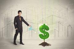 Água poring do homem de negócio no sinal da árvore do dólar no fundo da cidade Fotografia de Stock