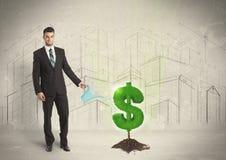 Água poring do homem de negócio no sinal da árvore do dólar no fundo da cidade Fotos de Stock