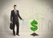 Água poring do homem de negócio no sinal da árvore do dólar no fundo da cidade Foto de Stock