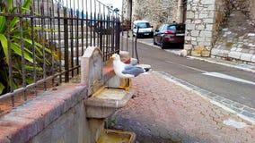 Água potável bonita da gaivota na cidade velha de Cannes foto de stock