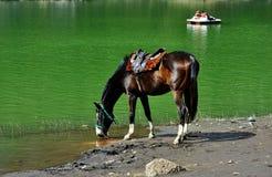 Água potável do cavalo em um lago foto de stock