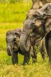 Água potável sedento da mãe do elefante com bebê foto de stock