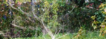 Água - pulverizada com uma mangueira da água que olhe como a chuva imagens de stock royalty free