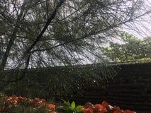 Água que cai da folha da árvore Fotos de Stock