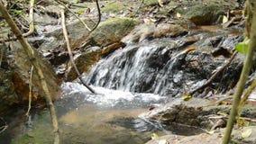 Água que cai na rocha e na pedra da passagem do rio na floresta filme