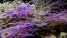 Água que corre através do recife de corais vibrante filme