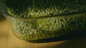Água que derrama no frasco de vidro com mung dal ou no close-up do grama dourado na luz natural vídeos de arquivo