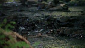 Água que derrama sobre rochas do rio video estoque
