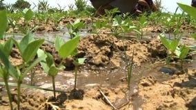 Água que inunda a terra seca na plantação vídeos de arquivo