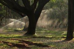 Água que polvilha no parque imagens de stock royalty free