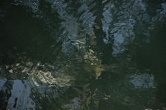 A água reflete Imagem de Stock Royalty Free