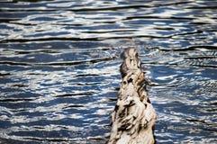 Água registrada Imagem de Stock Royalty Free